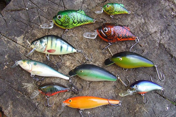 baits-for-catfish